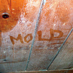 Wood in Anderson that's showing signs of cosmetically damaging mold